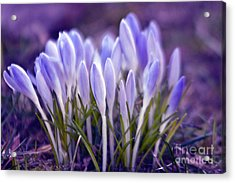 Acrylic Print featuring the photograph Ultra Violet Sound by Silva Wischeropp