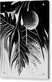 Ulu - Breadfruit Abstract Acrylic Print by Kerri Ligatich