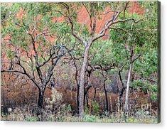 Acrylic Print featuring the photograph Uluru 05 by Werner Padarin