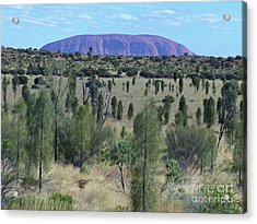 Uluru From The Bush Acrylic Print