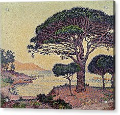 Umbrella Pines At Caroubiers Acrylic Print by Paul Signac