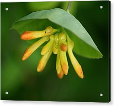 Acrylic Print featuring the photograph Umbrella Plant by Ben Upham III