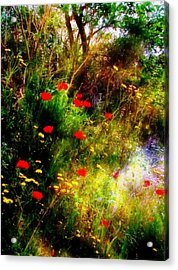 Umbrian Wild Flowers 3 Acrylic Print by Dorothy Berry-Lound