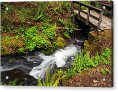 Umpqua Forest Beauty Acrylic Print