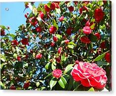 Uncommon Camellias Acrylic Print