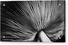 Under A Mushroom Acrylic Print