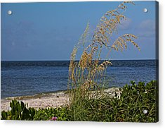 Acrylic Print featuring the photograph Under A Summer Sky by Michiale Schneider