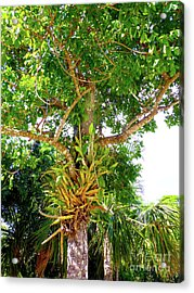 Acrylic Print featuring the photograph Under A Tropical Tree M by Francesca Mackenney