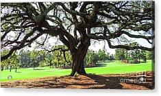 Under An Augusta Oak Acrylic Print