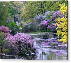 Under Spring's Spell Acrylic Print by Living Color Photography Lorraine Lynch