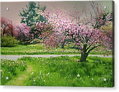 Acrylic Print featuring the photograph Under The Cherry Tree by Diana Angstadt