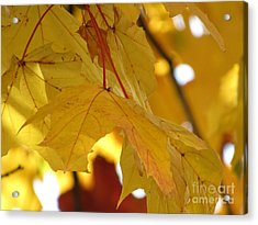 Under The Golden Canopy Acrylic Print