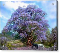 Under The Jacaranda Acrylic Print by Carol Cavalaris
