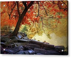 Under The Maple Acrylic Print by Jessica Jenney