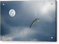 Under The Moon Acrylic Print