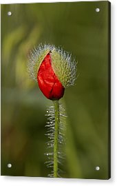Under The Morning Dew Acrylic Print