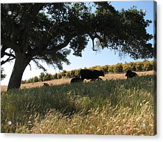 Under The Oak Tree Acrylic Print by Jan Cipolla