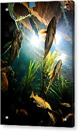 Under The Sea Acrylic Print by Todd Klassy