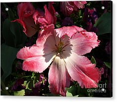 Under The Shadow Acrylic Print by Judy  Waller