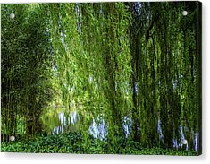 Under The Willow Tree Acrylic Print by Martin Newman