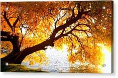 Under The Yellow Tree Acrylic Print