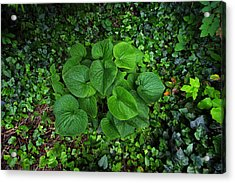 Acrylic Print featuring the photograph Undergrowth by Anthony Rego
