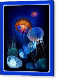 Undersea Dream Acrylic Print by Linda Olsen