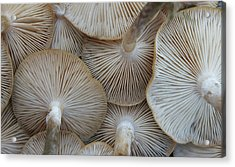Underside Of Mushrooms Acrylic Print by Greg Adams Photography