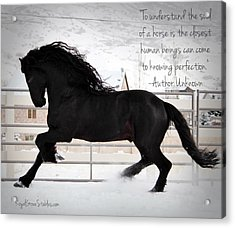 Understand The Soul Of A Horse Acrylic Print