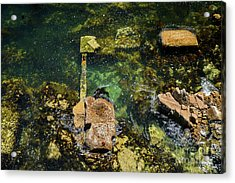 Acrylic Print featuring the photograph Underwater Art At Cannery Row by Susan Wiedmann