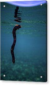 Underwater Branch Acrylic Print