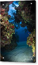 Underwater Crevice Through A Coral Acrylic Print by Todd Winner