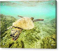 Underwater Flight Acrylic Print by Peter Irwindale
