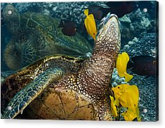 Underwater Friends Acrylic Print by Dave Fleetham