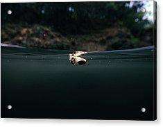 Underwater Leaf Acrylic Print