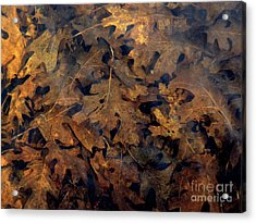 Underwater Leaves Acrylic Print by Robert Ball