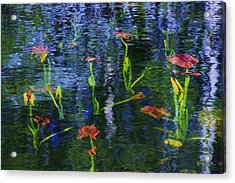 Acrylic Print featuring the photograph Underwater Lilies by Sean Sarsfield