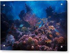 Underwater Paradise Acrylic Print by Betsy Knapp