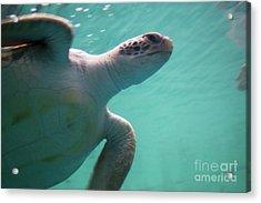 Underwater Race Acrylic Print