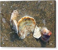 Underwater Treasures Acrylic Print by Margie Avellino