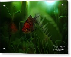 Underwater World Acrylic Print by Angel  Tarantella