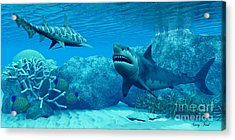 Underwater World Acrylic Print by Corey Ford
