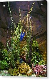 Underwater03 Acrylic Print by Svetlana Sewell