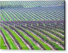 Undulating Vineyard Rows Acrylic Print by Jeff Lowe