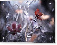 Une Fleur, Une Histoire Acrylic Print by Fabien Bravin