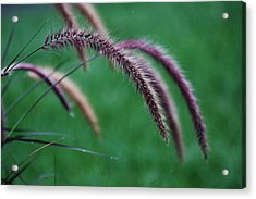 Acrylic Print featuring the photograph Unexpected Sharpness by Vadim Levin
