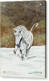 Unicorn Icelandic Acrylic Print