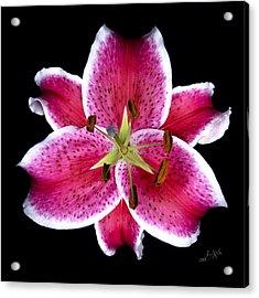 Unique Lily In Fushia Acrylic Print by Kimxa Stark