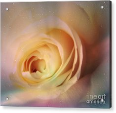 Acrylic Print featuring the photograph Universal Rose by Kristine Nora