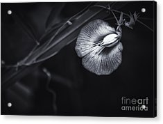 Unknown Beauty Acrylic Print by Marvin Spates